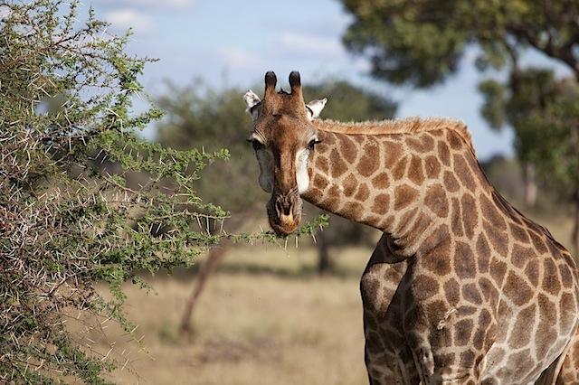 southafrica-138-1.jpg