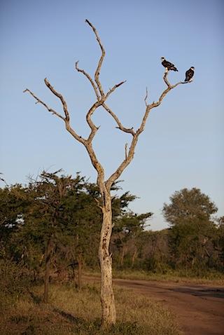 southafrica-153.jpg