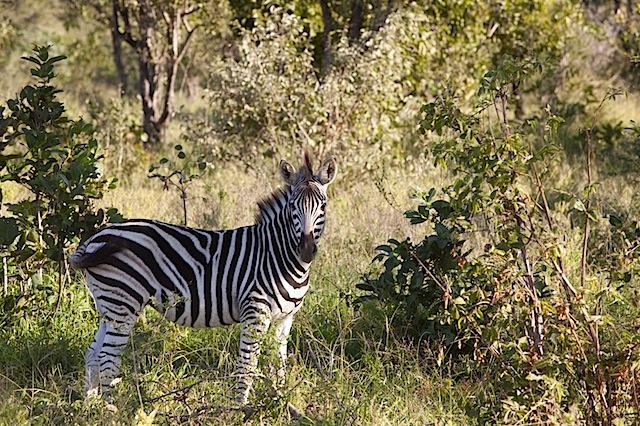 southafrica-17-2.jpg