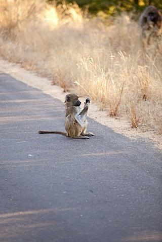 southafrica-175.jpg