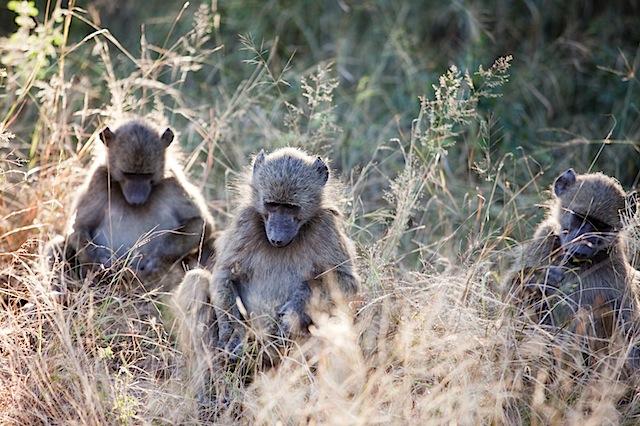 southafrica-184.jpg