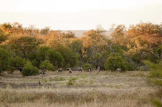 southafrica-197.jpg