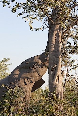 southafrica-35-2.jpg