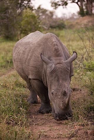 southafrica-49-1.jpg