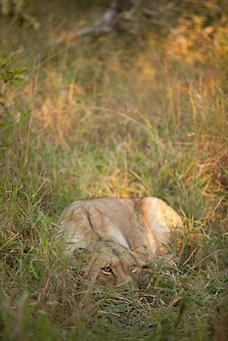 southafrica-52-2.jpg