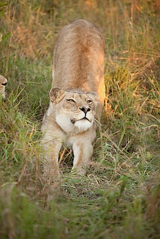 southafrica-56-2.jpg